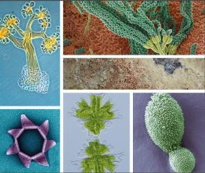 "Exhibition ""Amazing Microorganisms"""